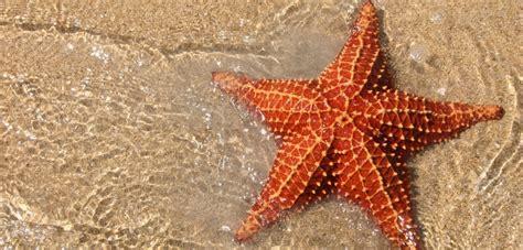 wallpaper bintang laut 9 cool facts about starfish
