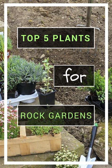 Best Plants For Rock Gardens Top 5 Plants For Rock Gardens Gardening How S