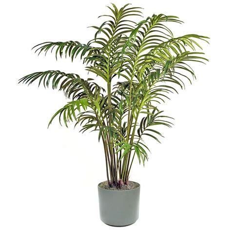 pianta appartamento dwg kentia piante da interno kentia pianta da appartamento