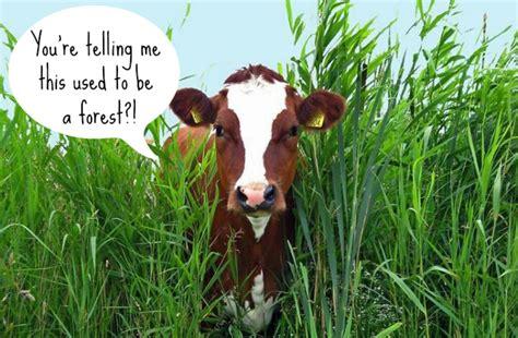 animal agriculture  draining  world