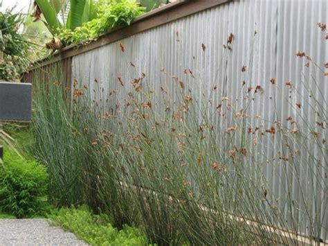 Garten Hohe Pflanzen by Sichtschutz F 252 R Den Garten Effektvolle Ideen F 252 R Den