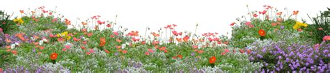 flower garden png poppies png by kibblywibbly on deviantart
