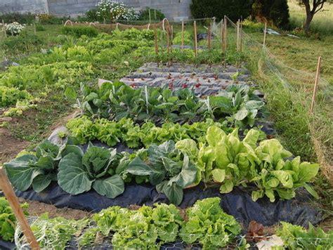 imagenes de huertas urbanas agroecologia con el profe yarugyver como hacer un huerto