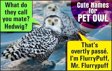 name for presenting some really and adorable names for your pet owl