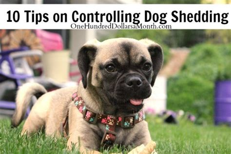 10 tips on controlling shedding
