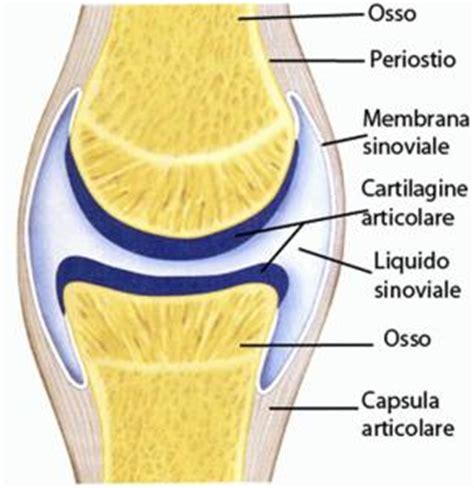 articolazione mobile articolazioni superagatoide