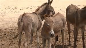 animal mating behavior breed safari
