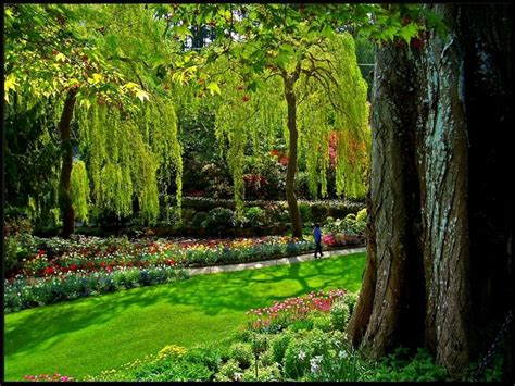 garden decoration queenstown 1000 images about wonders of the nature on