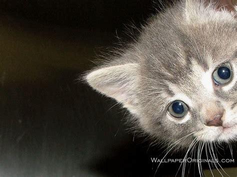 imagenes wallpapers gatos wallpapers de gatos im 225 genes taringa