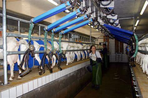 swing melkstand artgem 228 223 e ziegenhaltung
