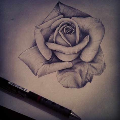 roses pencil drawing google da ara on we heart it