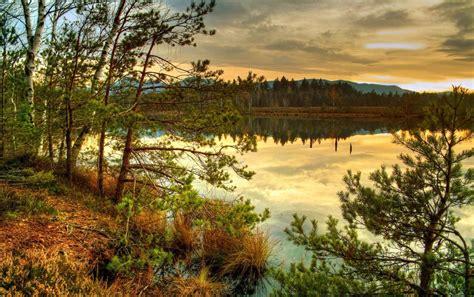 nice scenery trees lake wallpapers nice scenery trees