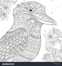 anti stress coloring book australia coloring page australian kookaburra bird freehand stock