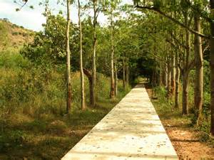Pathway Pictures File Pathway At Udayagiri Park Jpg Wikimedia Commons