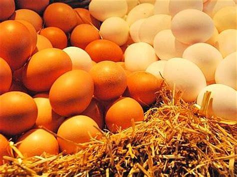 galline in gabbia adnkronos