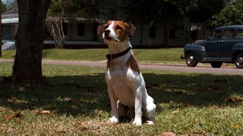 skips dogs my skip alchetron the free social encyclopedia