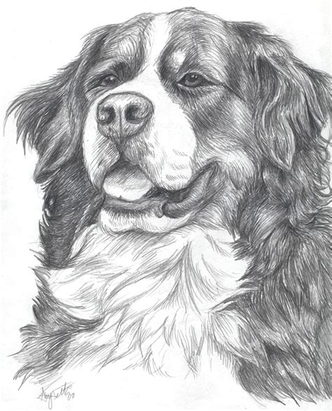 coloring pages of bernese mountain dogs bernese mountain dog by demodog on deviantart