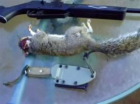 backyard squirrel hunting backyard squirrel hunting travel the world and
