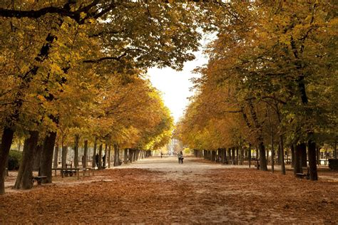 visiting paris  november  complete guide