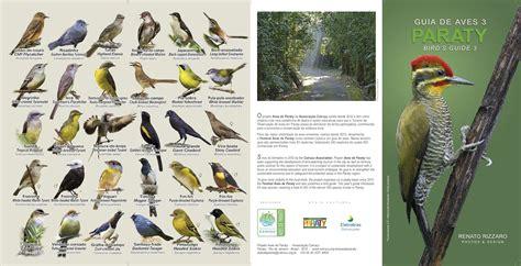 gua de aves renato rizzaro guia de aves de paraty 3