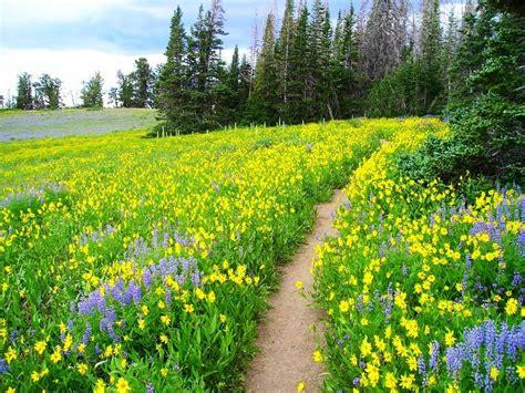 hiking trails  southern utah utah places   wild