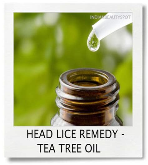tea tree oil after popping head on ingrown hair 20 best images about head lice on pinterest children