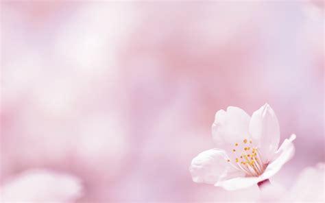 imagenes flores en hd flor de primavera fondos de pantalla hd wallpapers hd