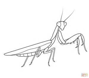 Praying Mantis Free Coloring Pages Praying Mantis Coloring Page