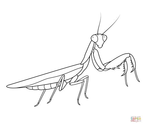 praying mantis free coloring pages