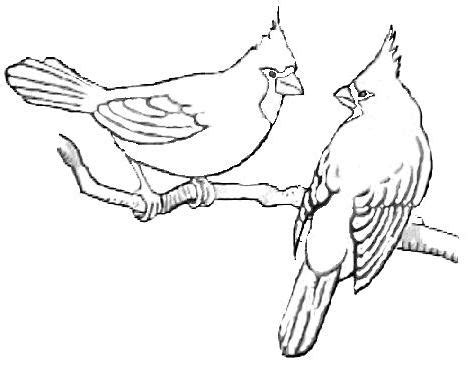 winter cardinal coloring page gallery for gt flying cardinal coloring page