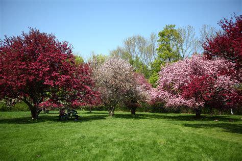 Royal Botanical Gardens Burlington Ontario Blossoming Trees In Royal Botanical Gardens Royal Botanica Flickr