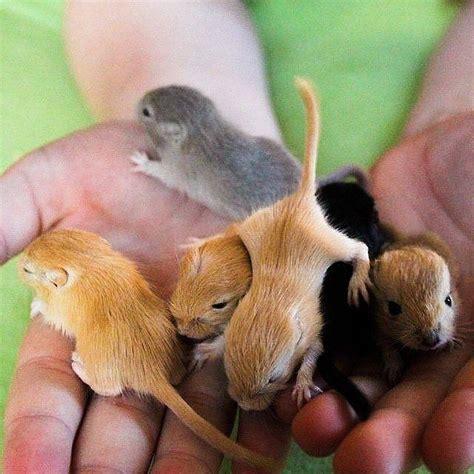Pet Room Ideas best 25 gerbil ideas on pinterest hamsters the hamster