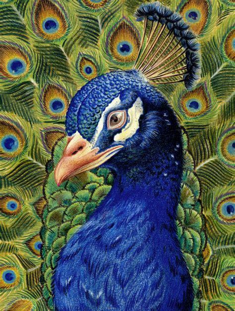 peacock reupload by neorike on deviantart