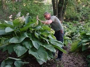 winning the battle perennials that thrive in shade