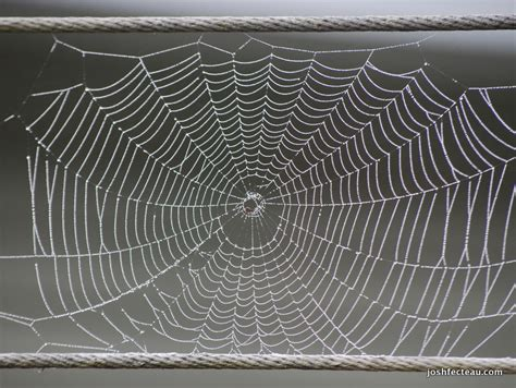 Pattern Nature Web | designs in nature spider web josh fecteau