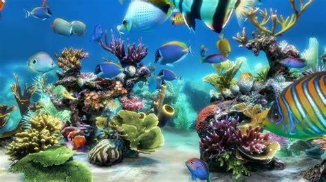 live wallpaper for pc full version sim aquarium scene 1 4k youtube