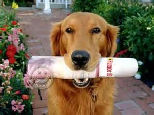 kata kata anjing pintar kata kata lucu gambar lucu