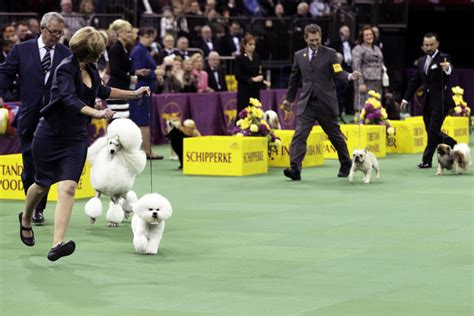 westminster kennel club show new york escape new york vacation rentals and apartment