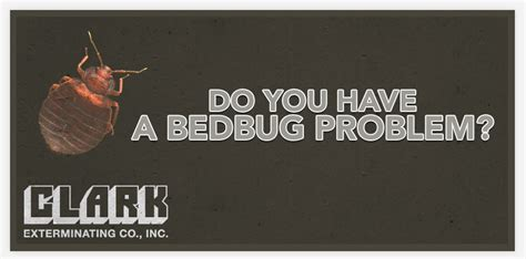 bed bug problem 5 signs of a bed bug infestation pest control little rock