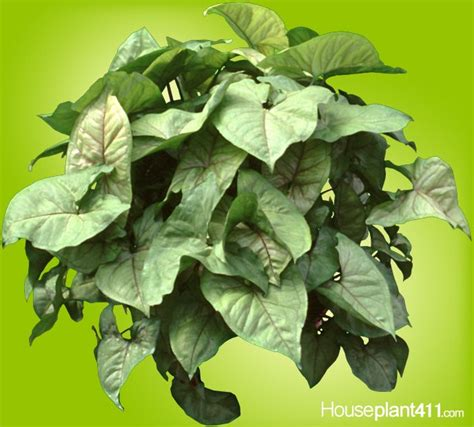 common house plants with shaped leaves 68 best images about how to identify a houseplant on