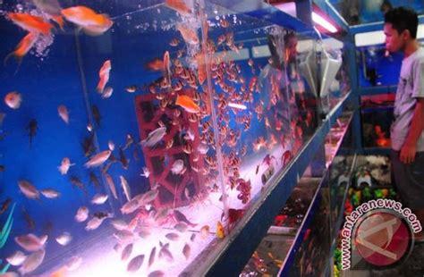 Lu Hias Yang Ada Kipasnya 10 bisnis ikan hias ini untung jutaan