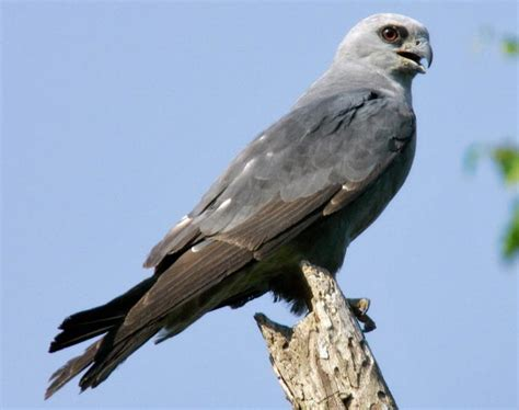 bethlehem birdman s tips lehigh valley bird sightings for