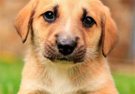 dati nazionale anagrafe canina anagrafe degli animali d affezione cos 232 e come funziona