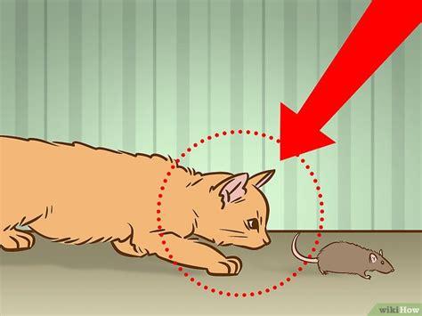 come scacciare i gatti dal giardino come eliminare i topi dal giardino finest affordable with