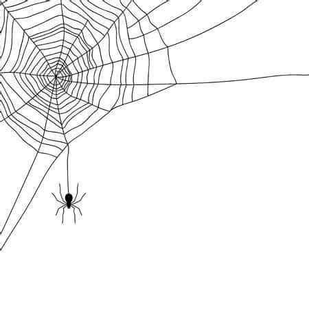 Free Web Clipart Free Spider Web Clipart Clipart Junction
