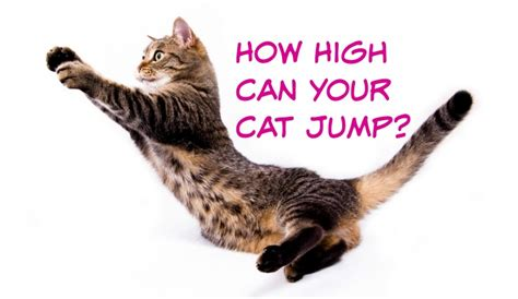 How To Stop A Cat From Jumping On Furniture by How High Can Your Cat Jump Slimkitty