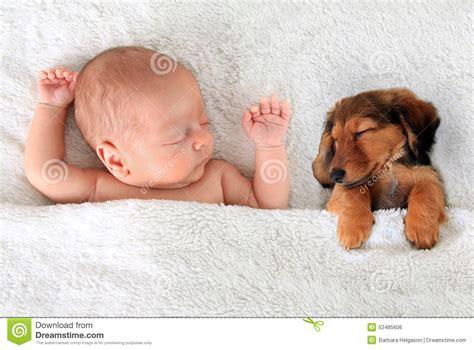 sleeping baby and puppy sleeping baby and puppy stock photo image of 52485606