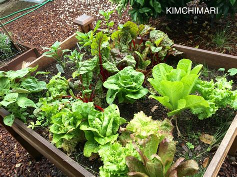 Types Of Greens For Korean Lettuce Wraps Ssam A Types Of Vegetable Gardens