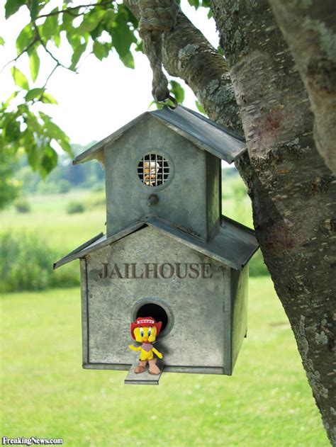 funny birdhouses pictures freaking news