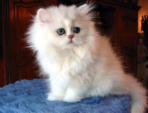imagenes en blanco y negro gatitos wallpapers de gatitos lindos taringa